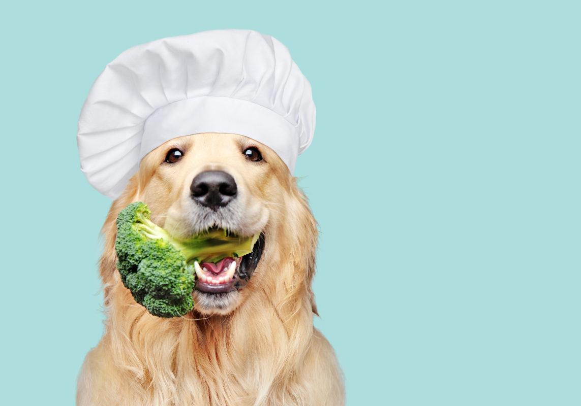 Kochen für Hunde