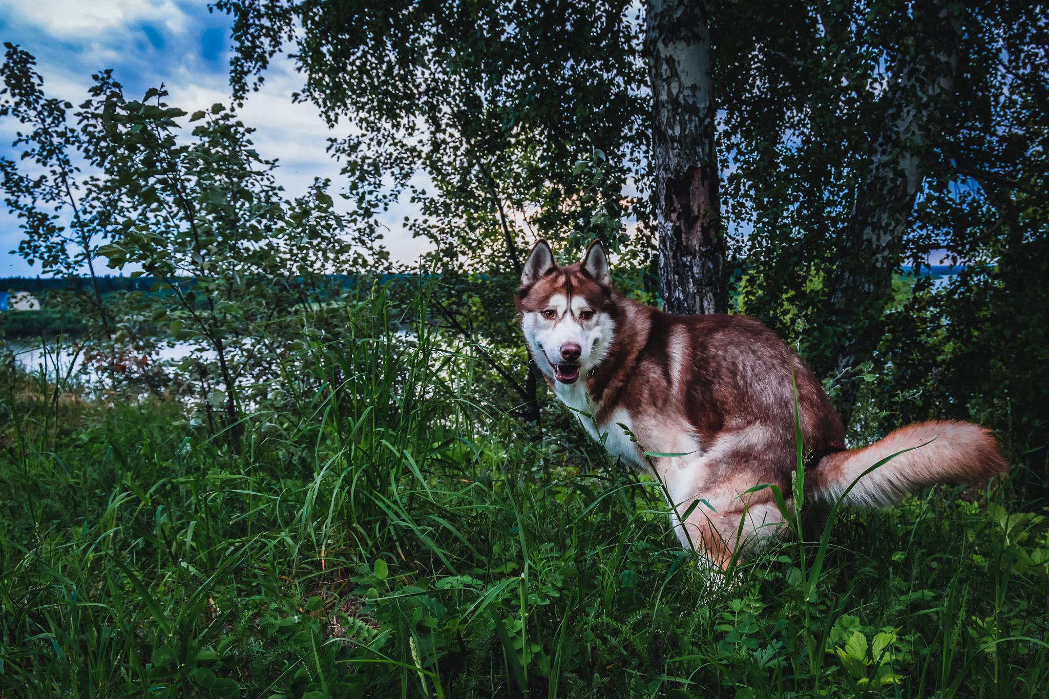 Hund Durchfall Giardien