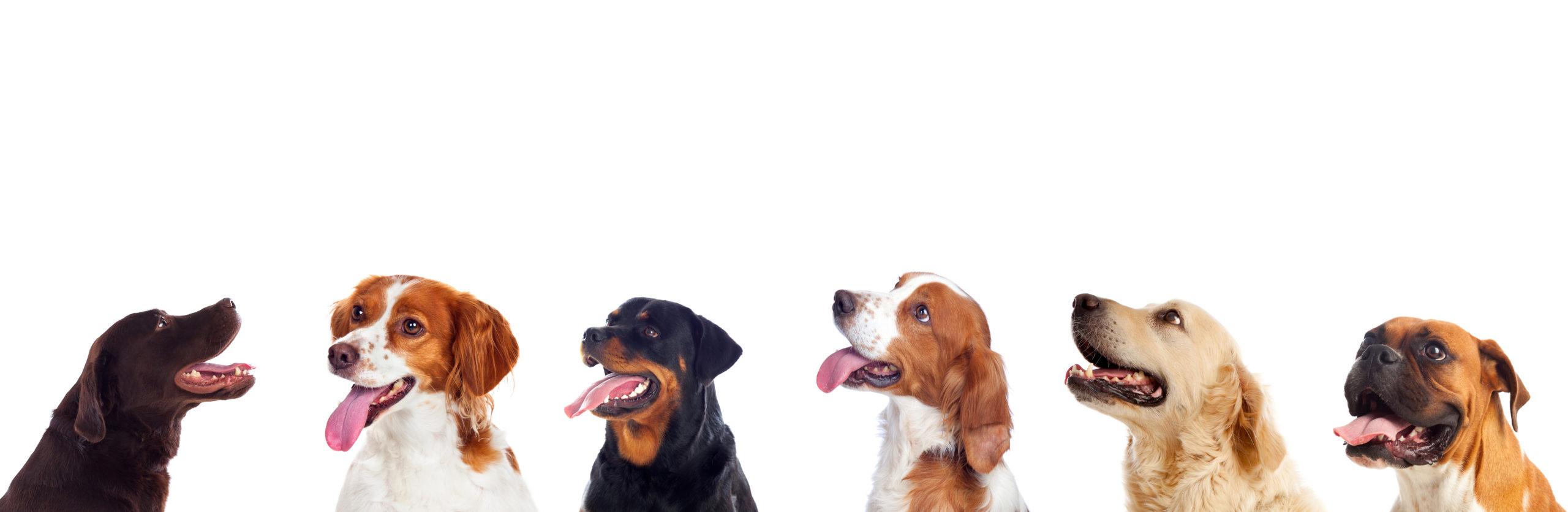 Welcher Hund passt zu dir?