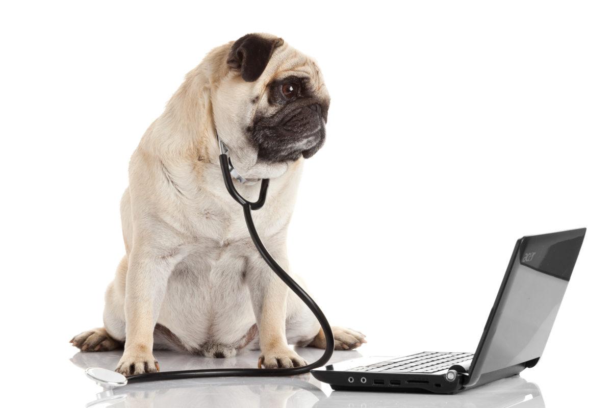 Die Notfallapotheke für Hunde